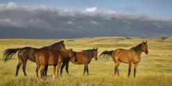 Adieu, Saskatchewan -- Gorgeous Photos Used with Permission