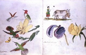 Potter's early drawings of plants and animals she observed in nature.