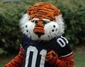 Auburn Tigers: A Fun Day for Football