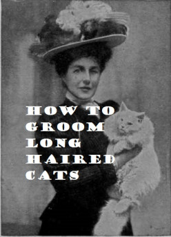 Best Ways to Groom Long Haired Cats and Remove Tangles