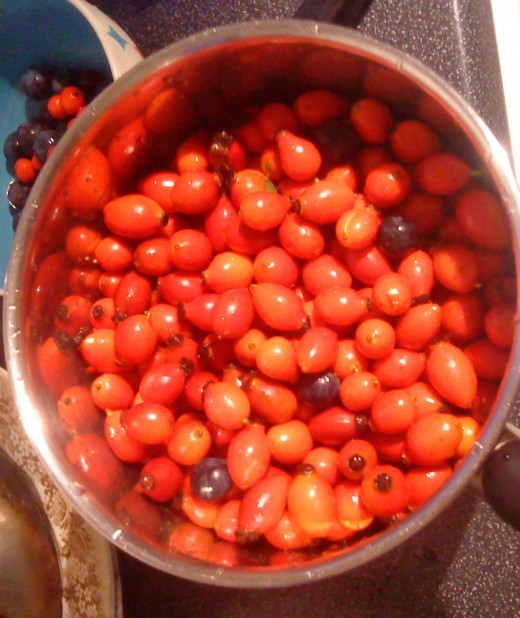 Shiny fresh rosehips with sloes and rowan berries ready for cooking up.