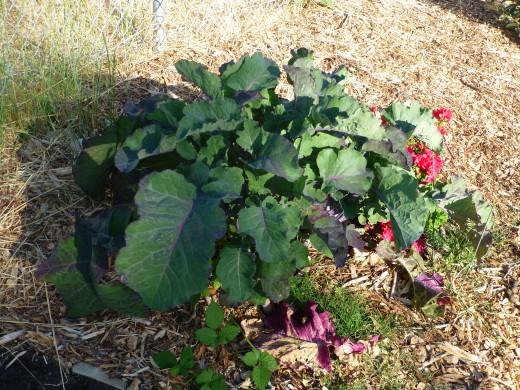 Ornamental little plants will get much, much bigger.