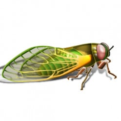 Chiquita Cicada on the Military Purge