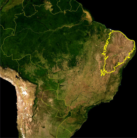 Caatinga Region of Brazil