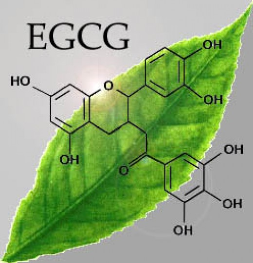 The structure of the amazing molecule EGCG.
