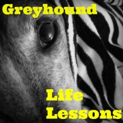 10 Life Lessons I've Learned From Retired Racing Greyhounds