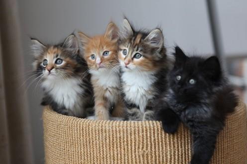 Four fluffy kittens mean quadruple the trouble.