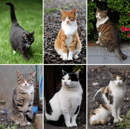 Collage of various breeds of cat.