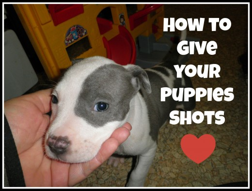 How to give your puppies their shots yourself. You can give them their vaccinations if you have confidence to do this correctly.