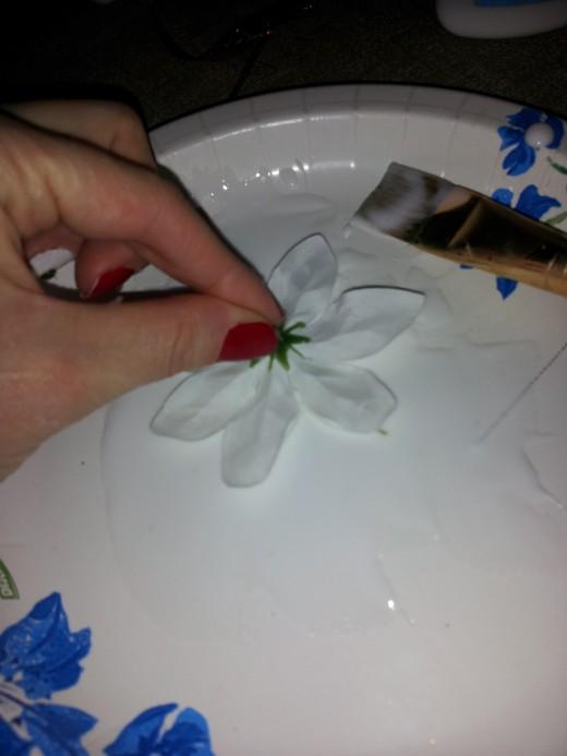 Dip poinsettia in glue