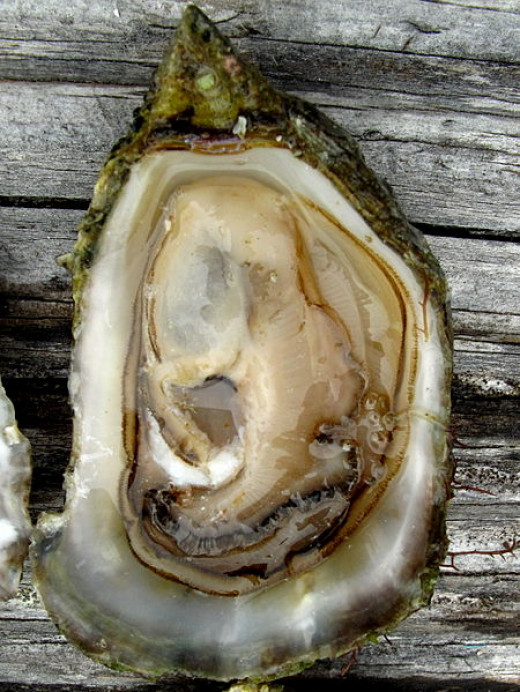 To cook these fabulous recipes choose very fresh oysters with clean shells