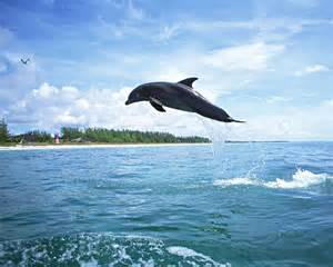 A Dolphin in our bay.