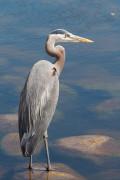 Indiana Backyard Wildlife Habitat