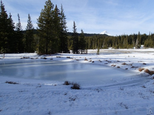 Frozen Meadow Pond