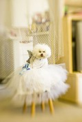 How to Have a Pet or Other Animal in Your Wedding Ceremony