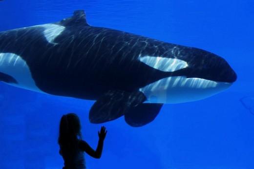 Page by Antony Pranata - A girl looking at killer whale at Marineland, Ontario, Canada