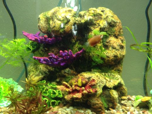 Gouramis like places to hide and things to explore. Rock work inserts from the per store make great tank decorations.