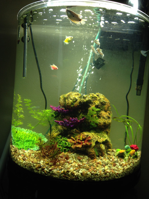 Heater, airstone, plants, and rock work all are good ideas for tanks with gouramis