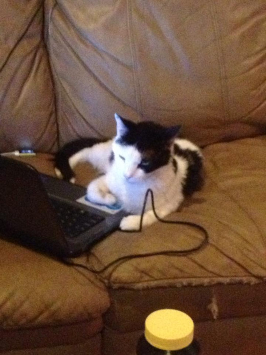 Miguel likes his computer time. Cats can't research what is good for them. Your cat relies on you to take good care of them. Help yourself be well informed about cat nutrition.