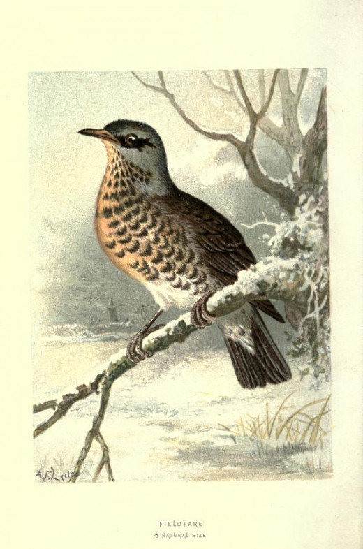 Familiar Wild Birds --Swaysland  1883