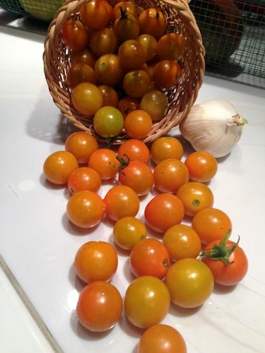 These Sun Gold cherry tomatoes are the first ripe tomato in my garden.
