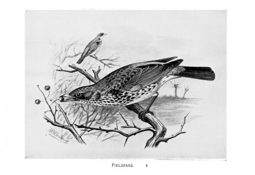 British Birds with their nest and eggs -Butler 1897