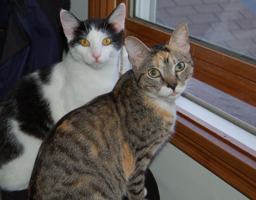 My two cats - Katrina on the left and Tori on the right