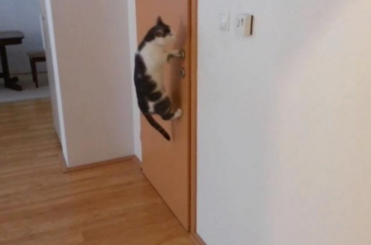 This cat knows how to open doors