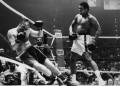 Meet The Real Rocky Balboa  - by Dan W. Miller