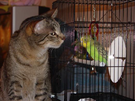 Small birds, like parakeets, make great pets