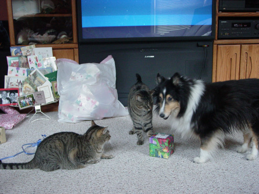 Often, dogs and cats can get along