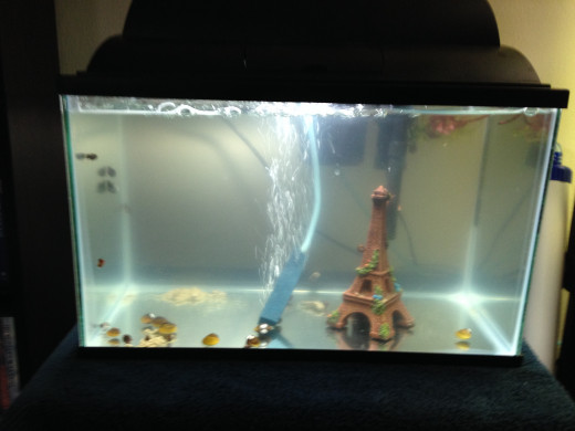 A five gallon tank is the perfect size for a couple of small fish, and a great size for first time fish keepers