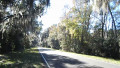 Mysterious and Enhanting Spanish Moss