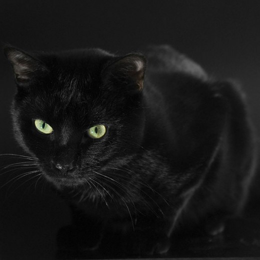 Black cats blend into the dark night. Only their eyes catch your attention.