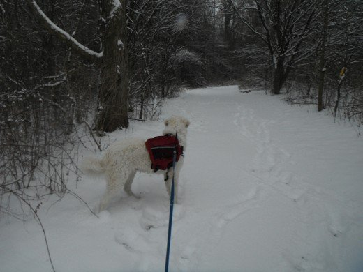 Hiking during a snow storm, K2 gets suspicious of the trail ahead.