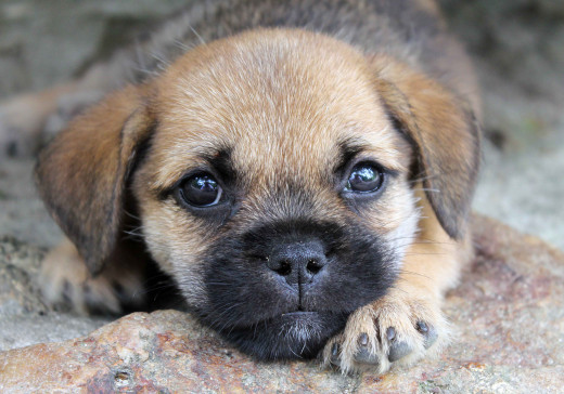 How could you turn down these sweet puppy eyes?