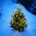 A Magical Christmas Moment