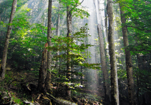 With the demise of humans, much of the temperate areas of Earth will revert to its natural state, old growth forest.