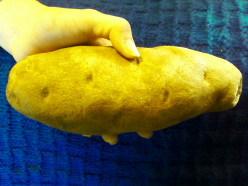 Is this the biggest baking potato that you have ever seen?