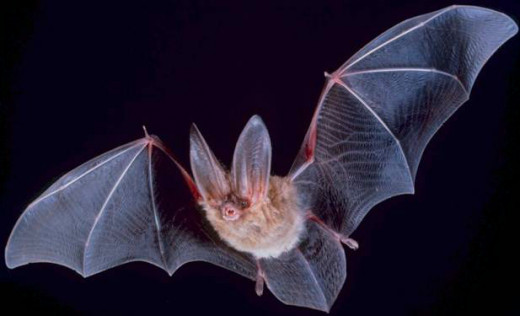 Bats too, will proliferate, and evolve to compete with the birds for the rich pickings of the diurnal world.