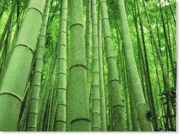 Machiku Bamboo makes the best Gourmets because of its Tenderness, Juiciness and Taste.