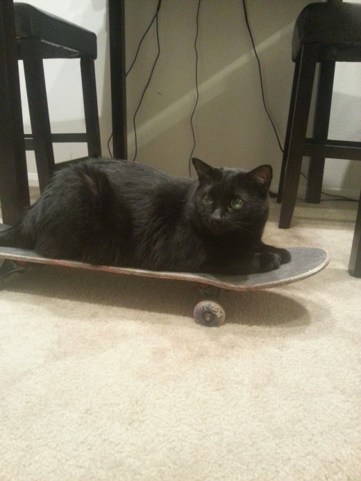 Cat riding skateboard