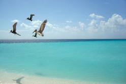 Birding Los Roques Archipelago and Isla La Tortuga, Venezuela