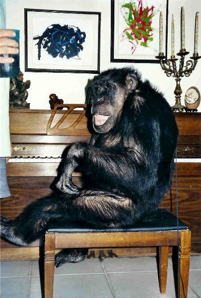 One of the chimps who likely portrayed Cheeta.