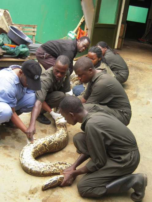 Training Animal Care Workers