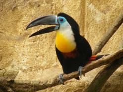 Birding near Maturin, Venezula: Caño Colorado