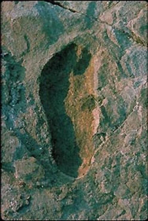 Laetoli footprint