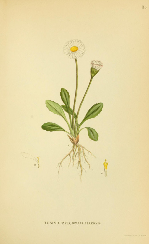 Billeder of Norden's Flora  {1917-1927