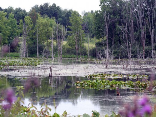 Wetlands at Pokagon State Park