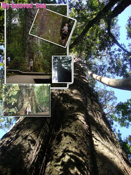 My beloved Big Tree